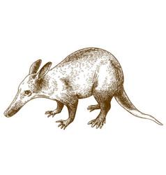 engraving drawing of aardvark vector image
