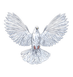 Flying white dove front view full color sketch vector