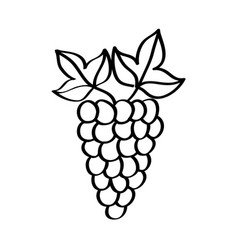 Grapes fresh fruit drawing icon vector
