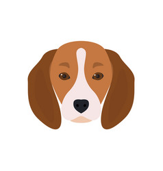 lovely head bearded dog beagle vector image