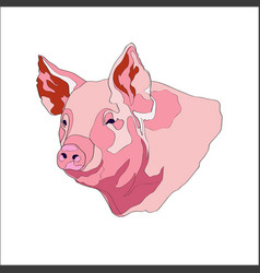 pig pig head color vector image