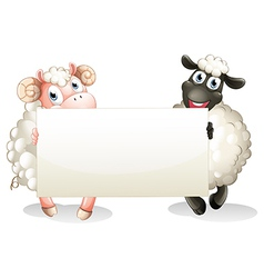 Two sheeps holding an empty banner vector
