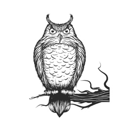 Owl is sitting on the branch vector image vector image