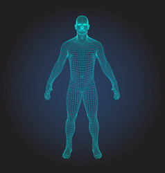 3d wireframe human body vector image