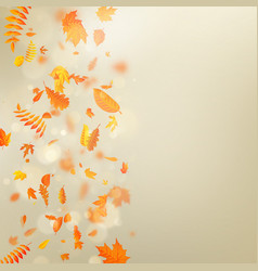 autumn template with maple autumn leaves eps 10 vector image