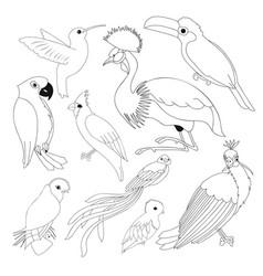 big set of exotic birds vector image