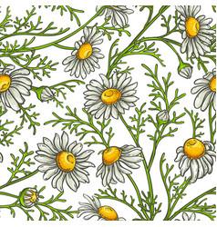 chamomile flower pattern vector image