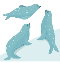 Fur Seal Wildlife Set vector
