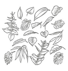 hand drawn elegant leaves vector image