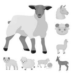 isolated object of sheep and goat logo collection vector image