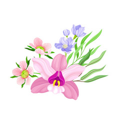 Purple orchid bloom with labellum arranged with vector