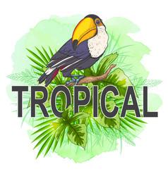 Summer background with toucan bird vector