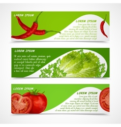 Vegetables banners horizontal vector image