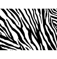 Zebra Pattern EPS 10 vector