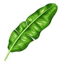 banana palm leaf decorative image vector image