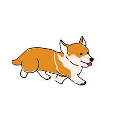 dog breed corgi vector image