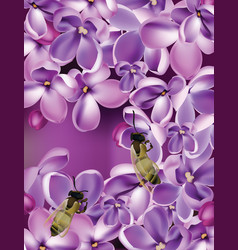 Lilac flowers realistic vector