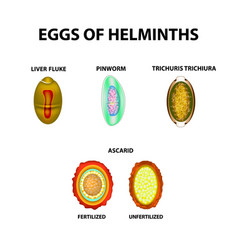 Set helminth eggs hepatic fluke ascaris pinworm vector