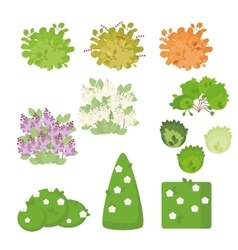 Set of outdoor plants and shrubs with flowers vector image