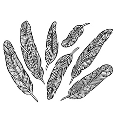 Zentangle handmade stylized feathers vector