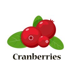 cranberries isolated icon for vector image