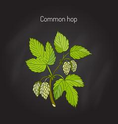 Common hop branch vector