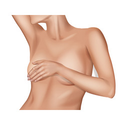 female breast vector image