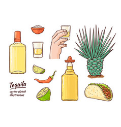 glass tequila bottle sketch icon isolated vector image