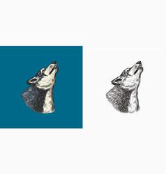 Gray wolf howling a predatory beast wild forest vector