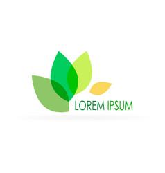 Lorem ipsum design vector