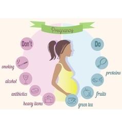Pregnancy trimester infographic vector