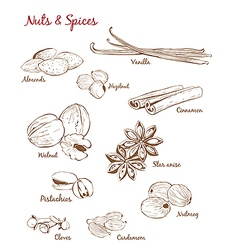 Set of with Spices and Nuts vector
