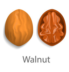 walnut mockup realistic style vector image