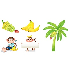 Bananas and monkeys with an empty signboard vector image vector image