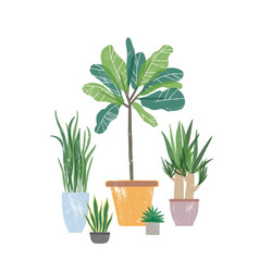 decorative houseplants flat vector image