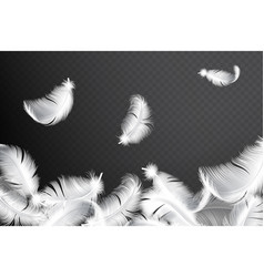 falling realistic feathers isolated vector image