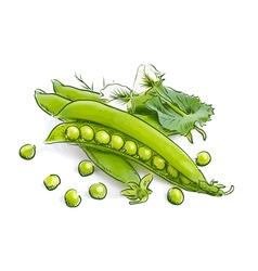 Pea pods vector image
