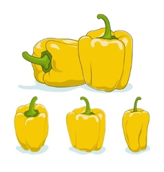 Yellow bell peppersweet pepper or capsicum vector