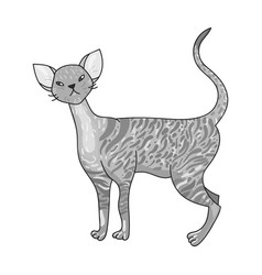 Cornish rex icon in monochrome style isolated on vector