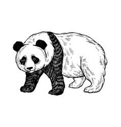 Panda bear engraving vector