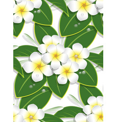 yellow plumeria flower pattern seamless on white vector image