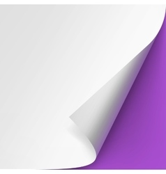 Curled corner of White paper on Purple Background vector image vector image