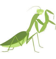 Cartoon green praying mantis isolated on white vector