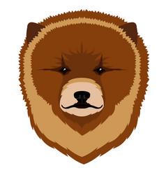 chow chow avatar vector image