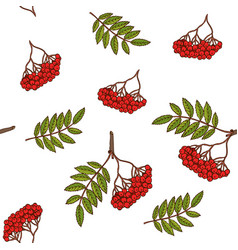 Seamless pattern with rowan branches vector