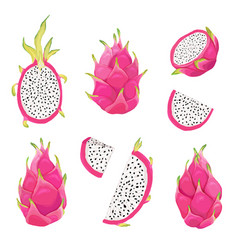 set dragon fruits pitaya design vector image