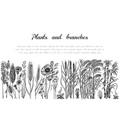 Wild flowers background wedding botanical plant vector