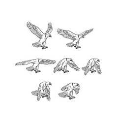 bald eagle flying drawing collection set vector image vector image