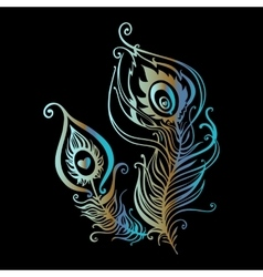 Beautiful peacock feathers vector image vector image