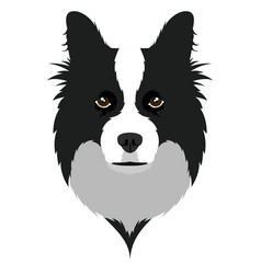 Border collie avatar vector
